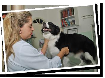 consulta-clinica-medica-geral-veterinaria