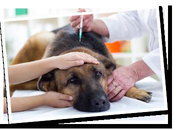 vacinas-animais