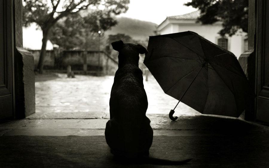 Por que os cães tem medo de chuva?