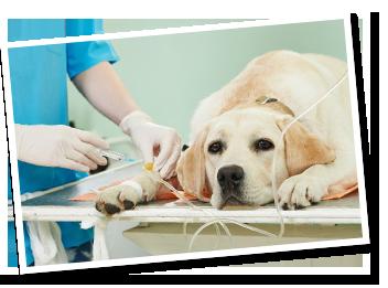procedimento-veterinario-de-emergencia