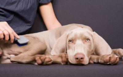 Troca de Pelos em Pets