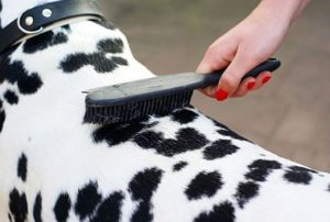 Escovação diária auxilia na troca de pelo.