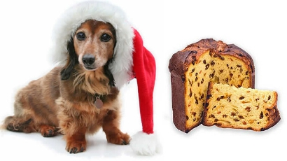 Meu cachorro pode comer Panetone?