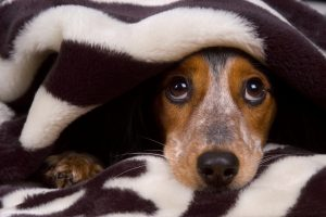 cachorro-com-medo