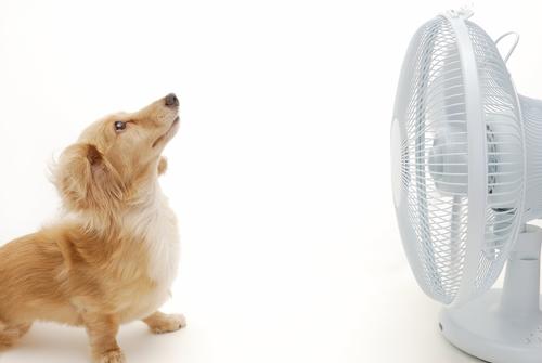 Cães no Verão – Cuidado com o Calor!