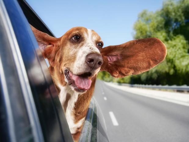 Perigos dos Passeios de Carro no Verão