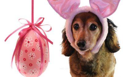 Páscoa: Chocolate Específico para Cães