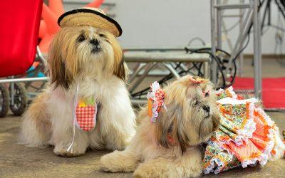 7 dicas para levar cães em Festas Juninas