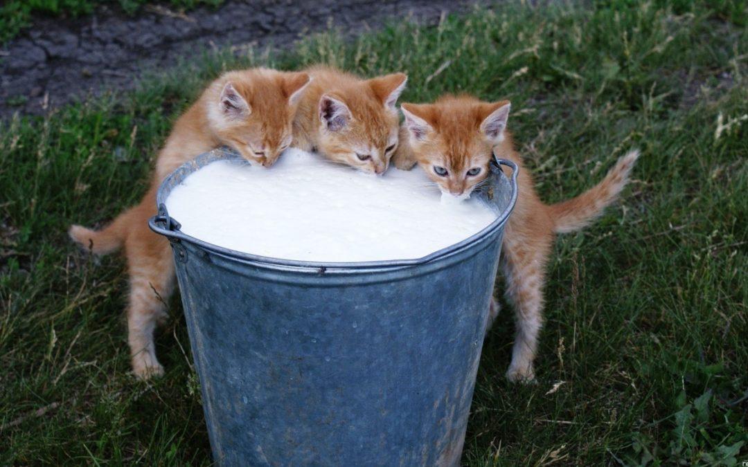 Cães e Gatos podem tomar leite?