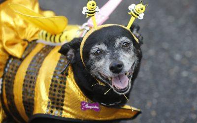 Calor, barulho e multidão; veja 5 cuidados com Pet's no Carnaval