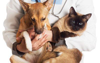 Quais os benefícios da castração para os pets?