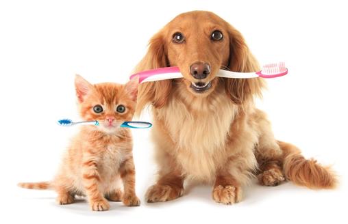 Entenda a importância de manter a higiene bucal dos pets